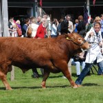 Langham's Louis 9 - Reserve Interbreed Recorded native Bull, Royal Welsh 2014 - SOLD